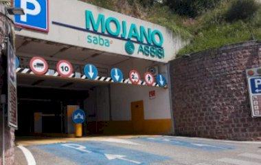 Assisi Mojano