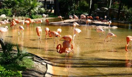 Zoo di Barcellona, Barcellona