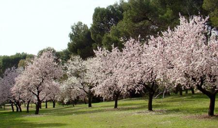 Quinta de los Molinos Park, Madrid